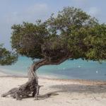 Partiu Caribe! Promoção de passagens para Aruba!
