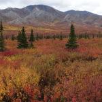 Descobrindo o Alasca
