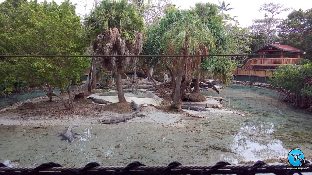 Crocodilos ou jacarés no Miami Seaquarium na Florida