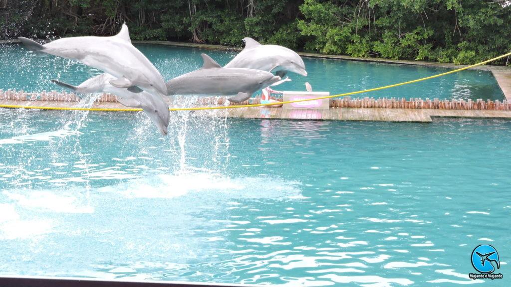 Apresentação com golfinhos flipper no Miami Seaquarium na Florida
