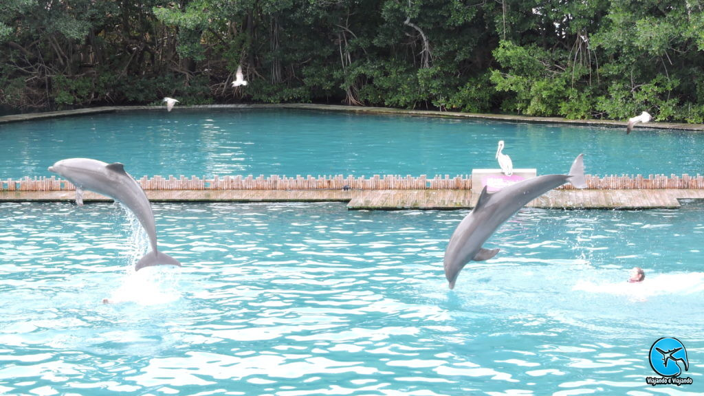 Dolphin Flipper Miami Seaquarium na Florida