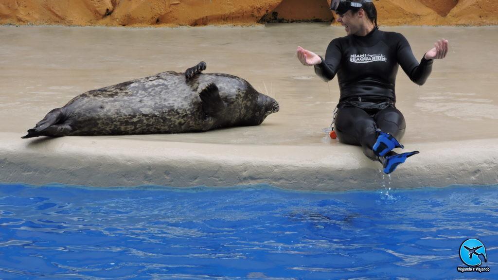 Sealion leão marinho no Miami Seaquarium na Florida
