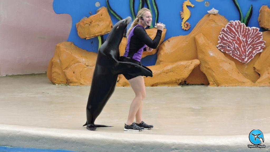Leão marinho ou sea lion no Miami Seaquarium na Florida