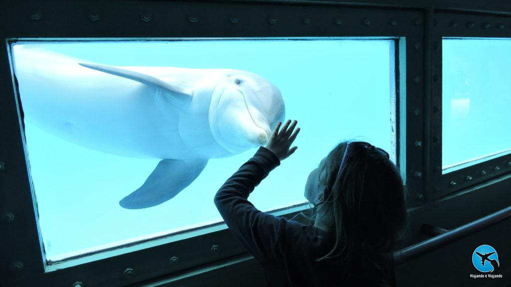 Encontro com golfinhos flipper dolphin no Miami Seaquarium na Florida