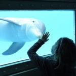 Miami Seaquarium – o maior aquário da Flórida!