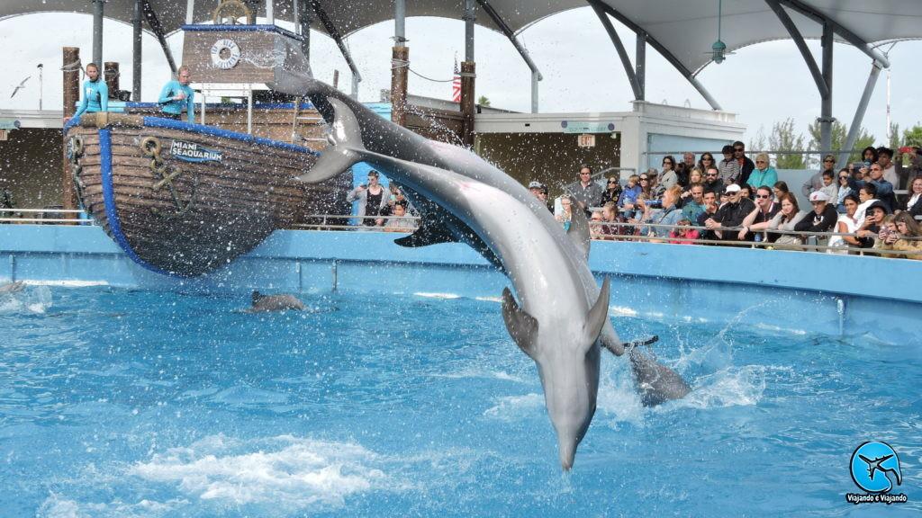Show com golfinhos no Miami Seaquarium na Florida