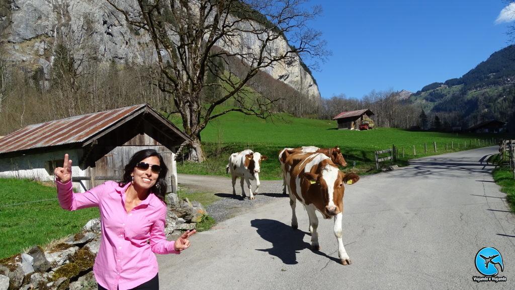 cowns vacas na suíça lauterbrunnen
